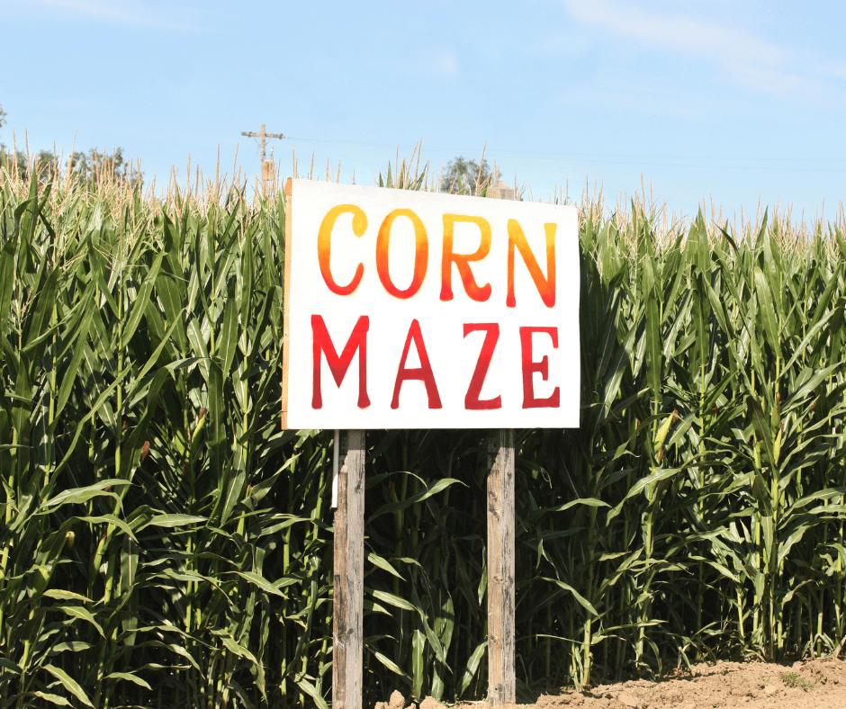 corn maze fall activity